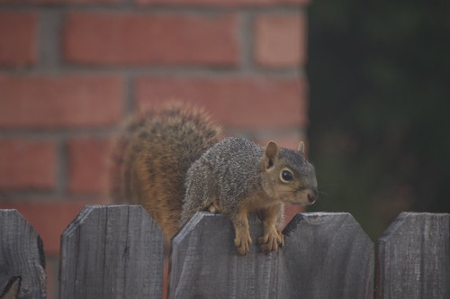10.01.2011 Watch Squirrel!