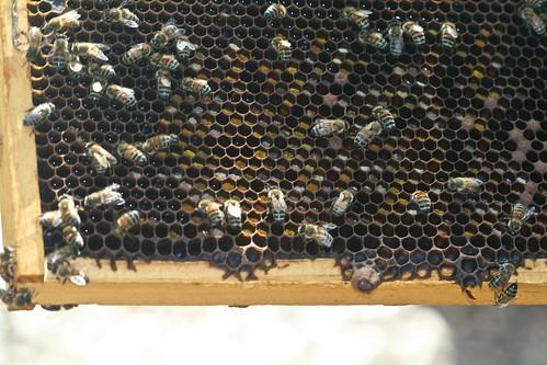 Pollen on Frame