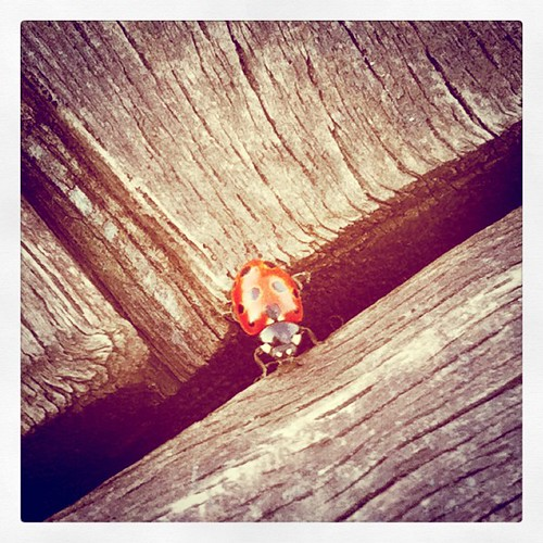 A Persistent lil Ladybug by mengteck