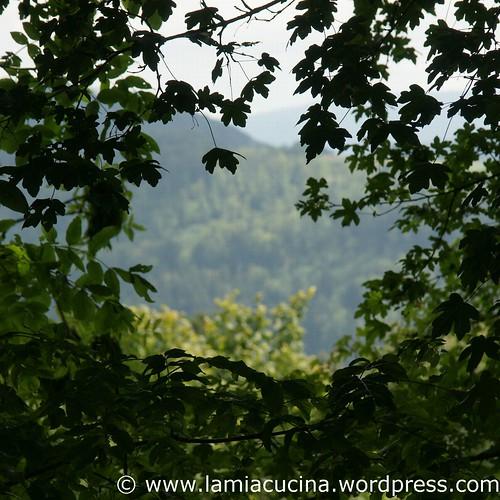 Landleben 1_2011 07 31_5261