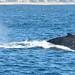 47 whale