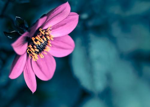 Flower dream por doug88888