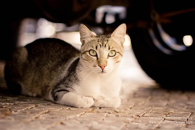 the {cat}