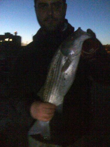 149_davefish