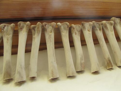 bone dress - drying