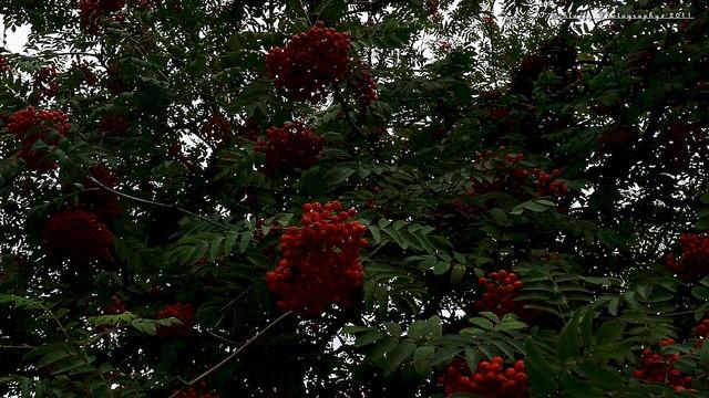 #199/365 Tree