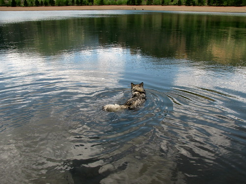 Luka swims for treats