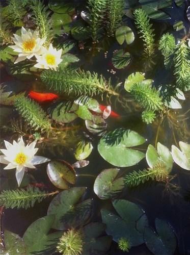 08.07.2011 Pond