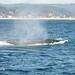 55 whale