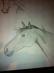 Drawn horse