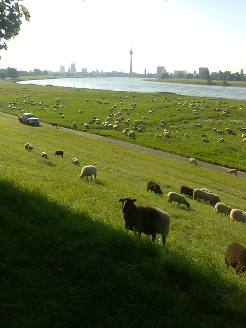 Safari in Düsseldorf -  Serengeti oder Masai Mara ist nix im Vergleich.