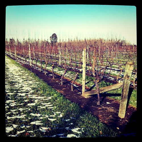 The row of Mendoza that I need to prune soon... by mengteck