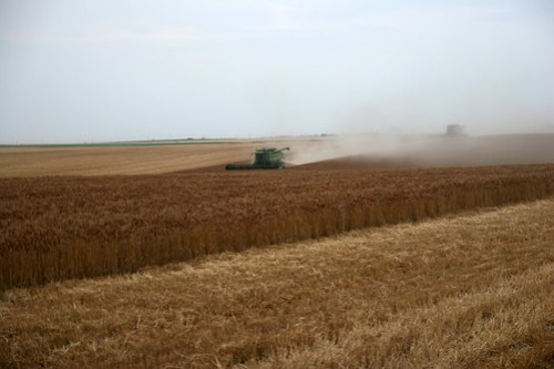 More dust and hills in this beautiful wheat field