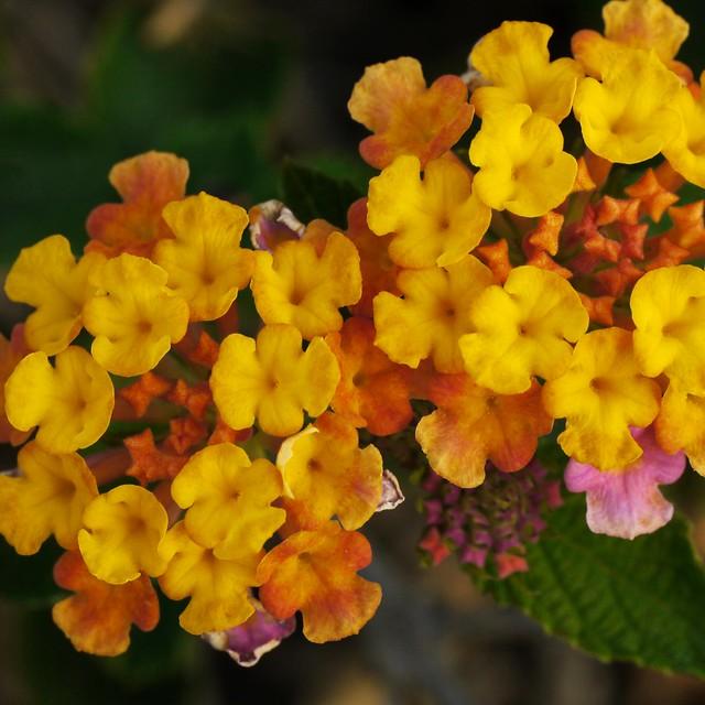 Ack! A Flower Macro!