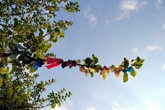 Nunnington Wishing tree 2
