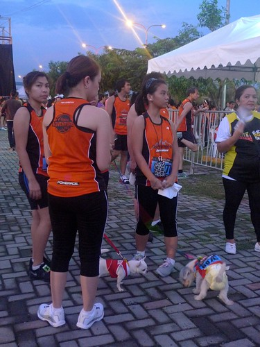 even the dogs have the bibs!