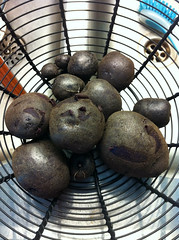 Salad blue potatoes from the garden. Just ♥ my garden.