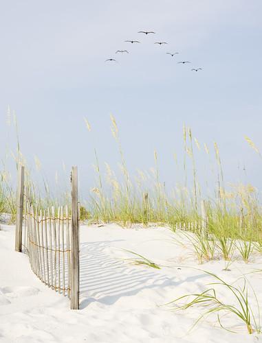 beach2f