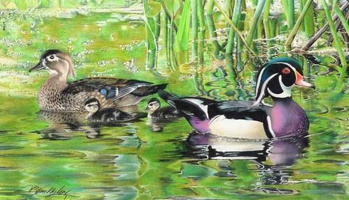 wonderling Wood Ducks final edit