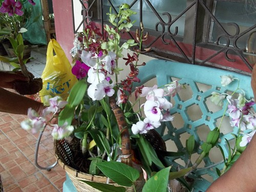 a basketful of orchids
