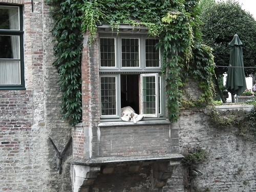 2011 Flandre - Bruges (173)