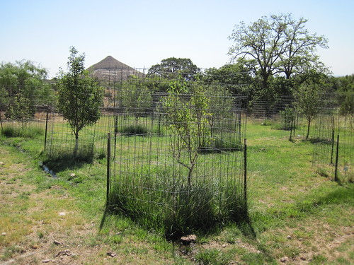 Frijole Ranch House Orchard