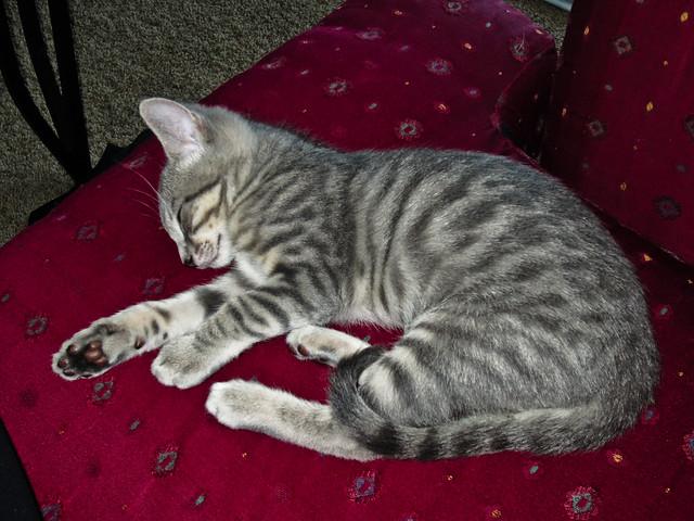 <kittensnore data-recalc-dims=