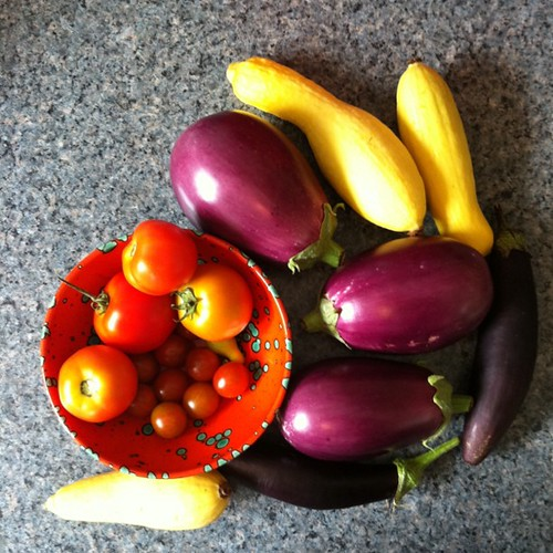 tomatoes, squash, eggplants from both gardens
