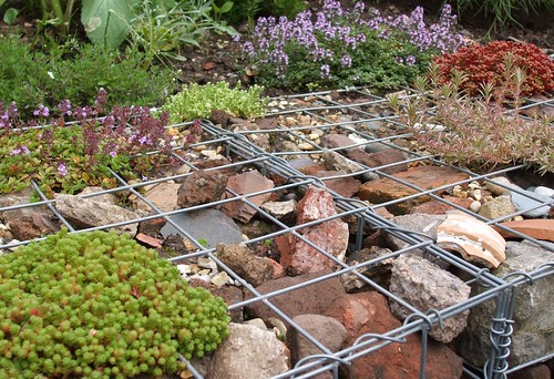 Newly built gabion wall with alpines