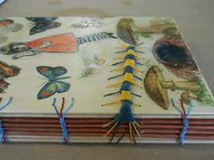 My caterpillar book on cords