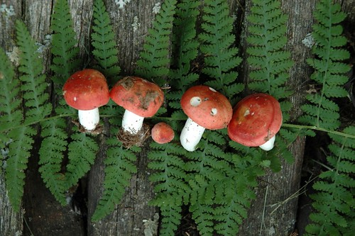 Mushroom muses