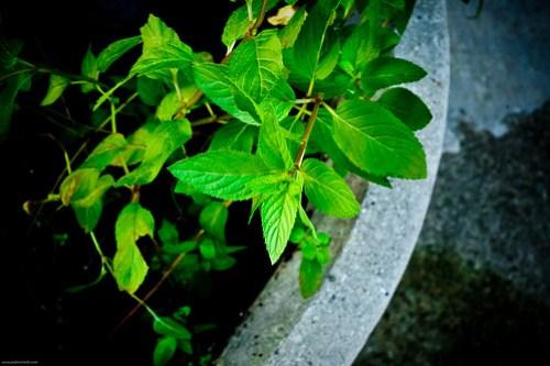 mint! portable gardening