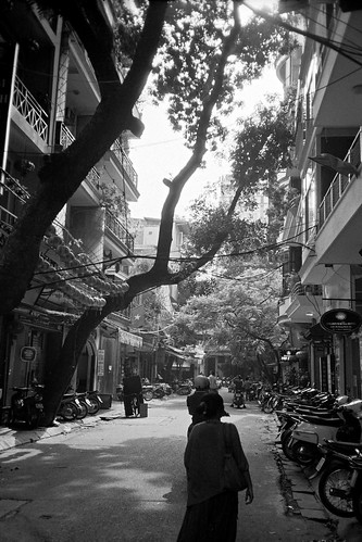 Tree To Walk With @ Ha Noi, Vietnam
