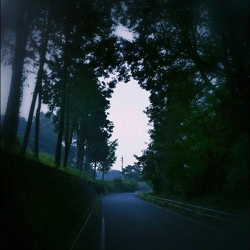 今朝のワンカット - 「朝靄」 #iphonography #instagram
