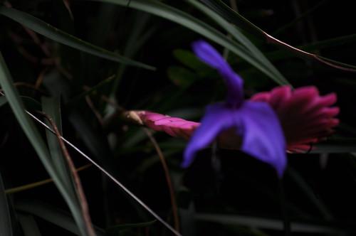 NC Zoo - Random Plant 5