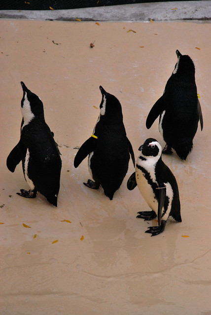 zoo penguin exhibit