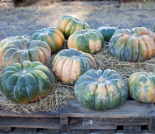 Pumpkin_Trip_4
