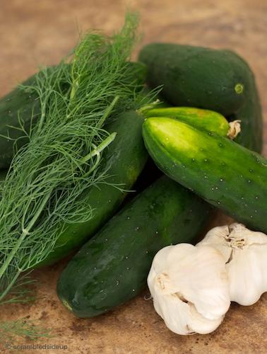 Dick Pickles Ingredients 01