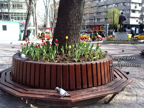 tulips P0134_110411 copy