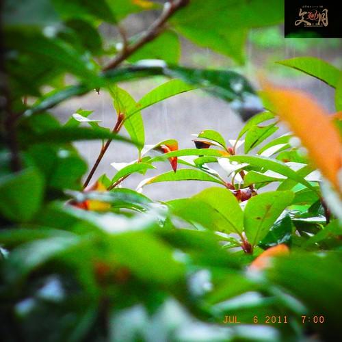 〈速報〉県内に大雨、洪水警報:熊本地方気象台は、相良村を除く県内全域に大雨、洪水警報を発表。低い土地の浸水や河川の増水に警戒呼び掛け。   (2011/07/06 06:24:14)