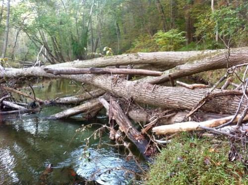 Big Log Jam in the Wildlands Area of Gunpowder State Park