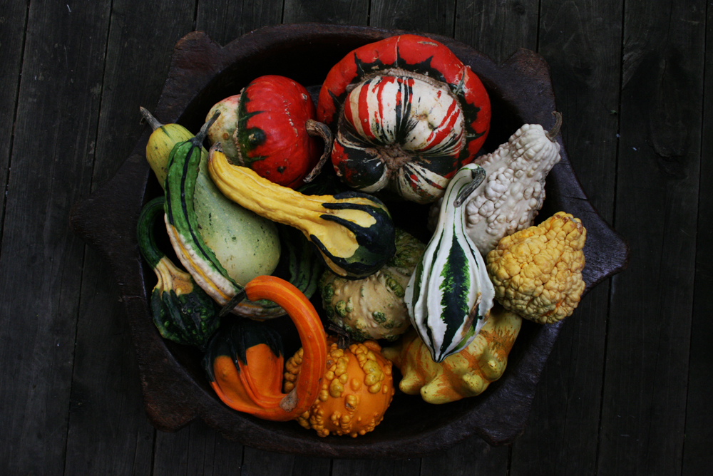 Gourds&Squashes_9533