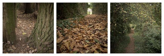 Trail #1-3
