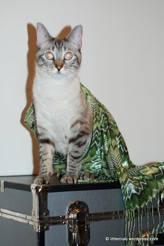chun scarf 10-12-2011 6-24-27 PM