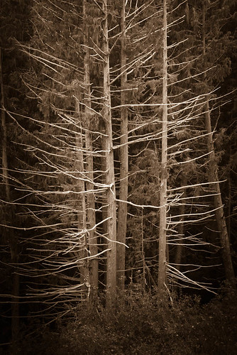 Herringbone Trees by Terry Schmidbauer