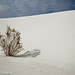 White Sands New Mexico-15.jpg