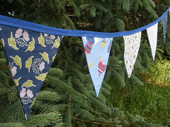 Blue Bunting Close Up