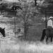 Paso Robles Horse Ranch 14
