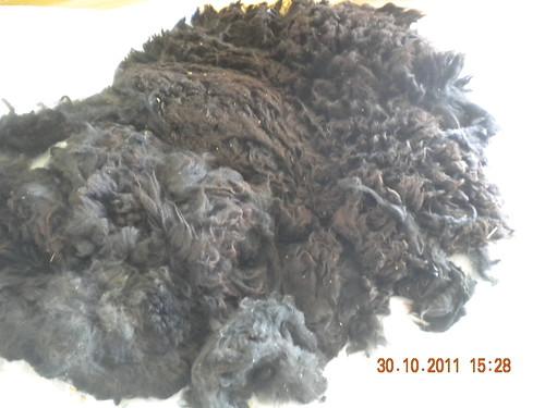 Alpaca 2011