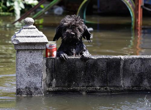 Hund guckt aus dem Wasser